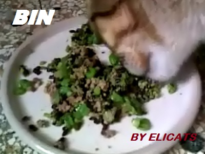 Black rice canine nutrition