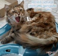 Rimedi naturali stomatite gatto