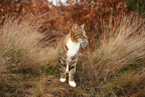 Cistite gatto rimedi naturali