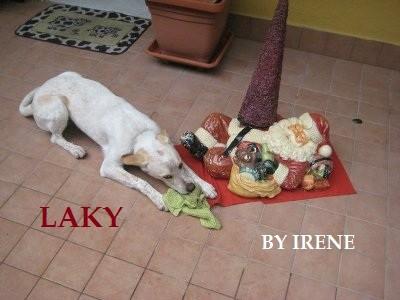 Alitosi e igiene orale cane