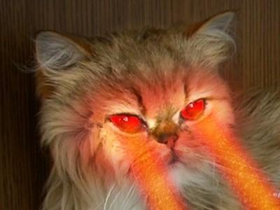 Infrarossi insufficienza renale ed artrite cane gatto