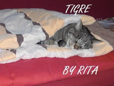 Rimedi alternativi al Fipronil pulci gatto