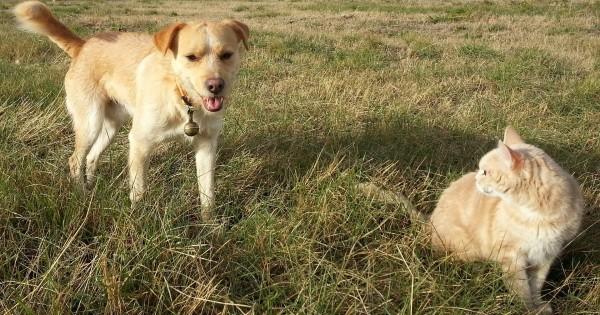 Ossigeno-ozonoterapia nel cane e gatto
