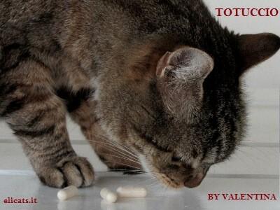 Azodyl insufficienza renale cronica cane gatto