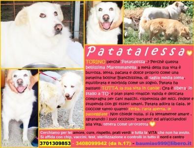 PATATALESSA comp