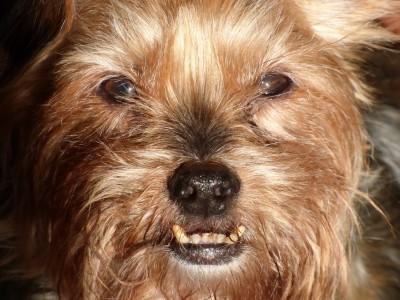 Perchè devo andare dal veterinario dentista