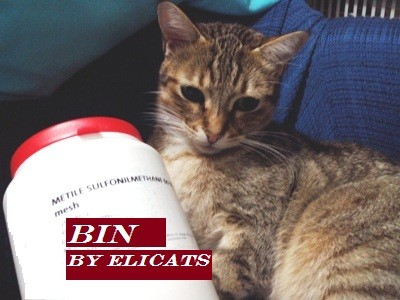 Glucosamine Chondroitin MSM in the cat and the dog
