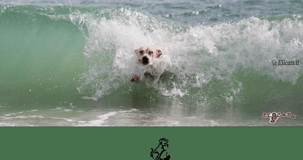 protezione solare cane