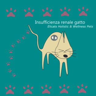 Insufficienza renale gatto