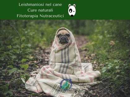 Leishmaniosi cane cura naturale