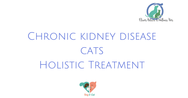 Chronic kidney disease cats