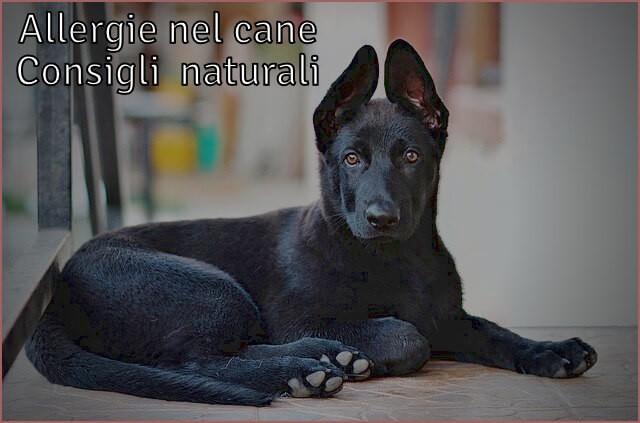 Allergie cani rimedi naturali Integratori ed erbe