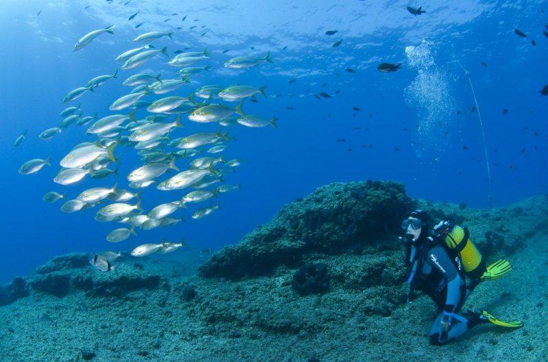 Ilhas Canárias: Uma vida marinha diversificada é vista de modo apreciativo nos mergulhos
