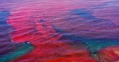 Maré Vermelha – O que é?