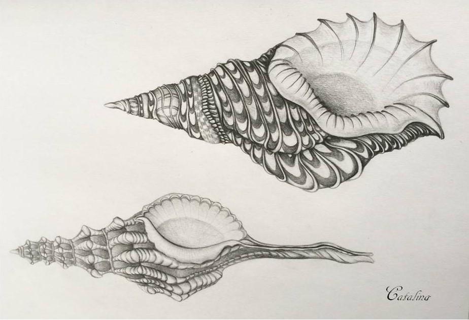 El Caracol - Elizabeth Healing Arts