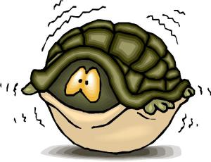 Turtle in shell