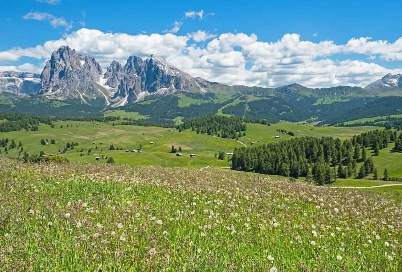 dove andare in montagna_alpe di siusi, prato fiorito con montagne sullo sfondo