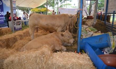 Expo Ganadera en la Feria de San Francisco del Rincón