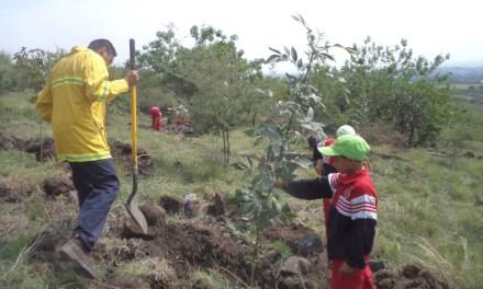 Plantan durante 2016 miles de árboles en Purísima
