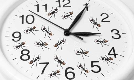 Los futuros que vienen: De Las Hormigas