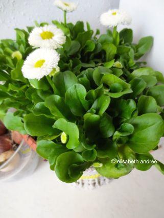 daisies and bulbs