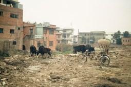 Elisabeth Rass, THE HOLY COWS, Serie Stadt/Menschen-Menschen/Stadt, analog photography