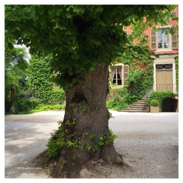 exterieur-2-arbre