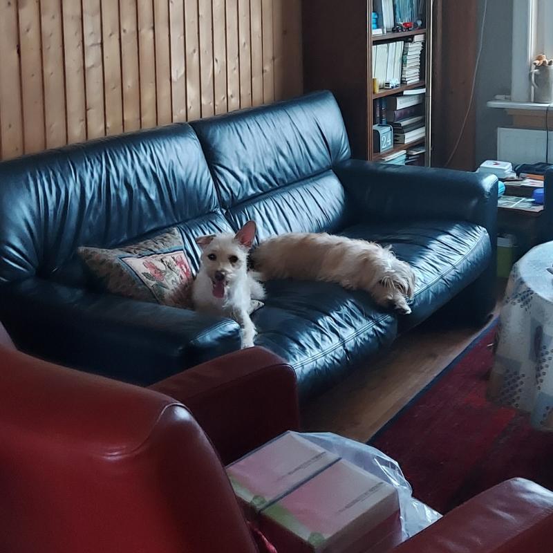 2 moeie hondenzusjes na het plukken