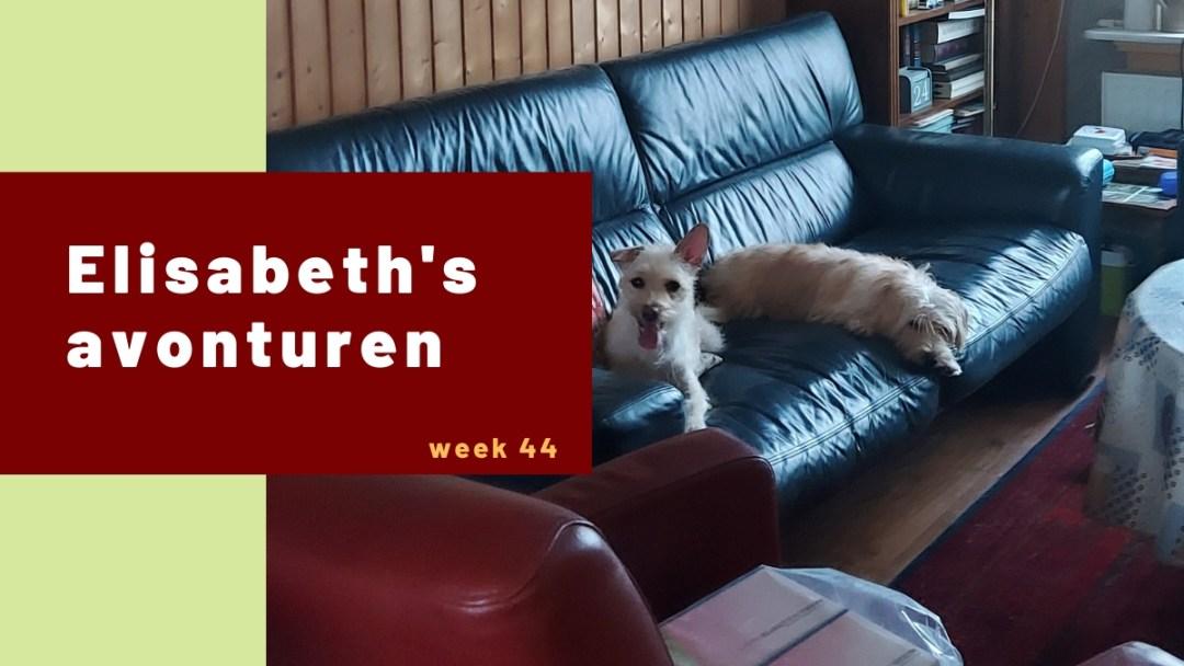 Elisabeth's avonturen week 44 – 2020