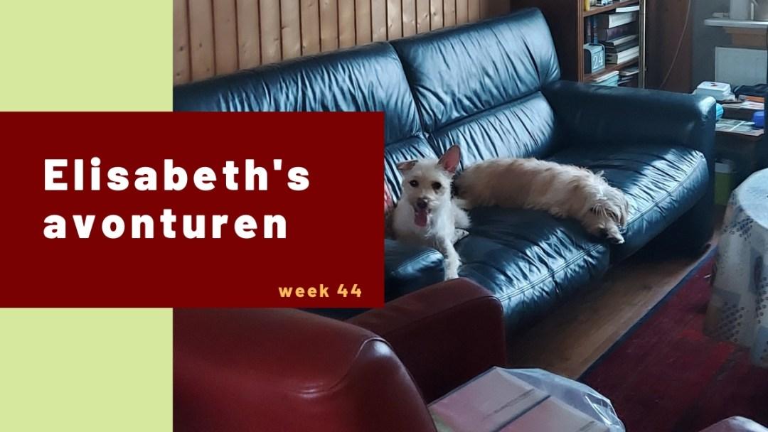 Elisabeth's avonturen week 44