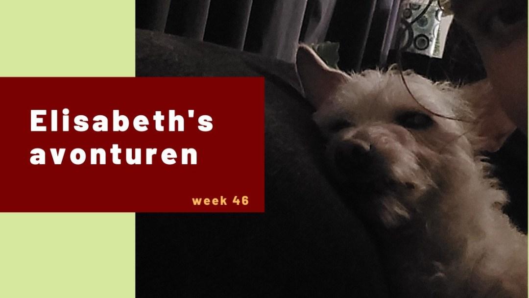 Elisabeth's avonturen week 46 – 2020
