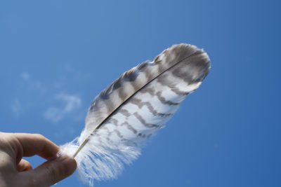 Sull'Intervento Divino e gli Angeli Custodi