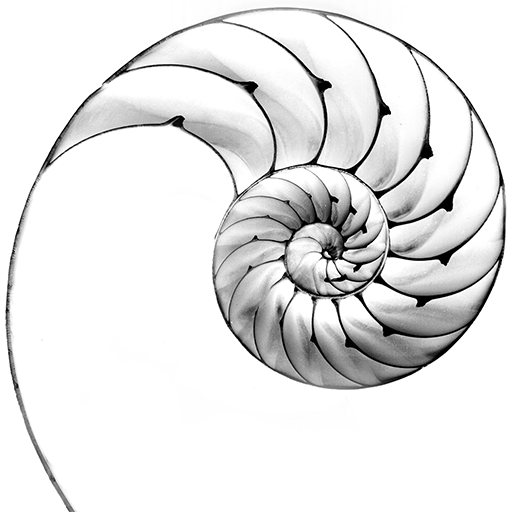black and white image of nautilus shell