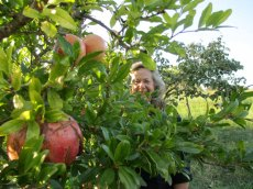 Gayanne-Pomegranate-tree-through