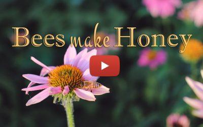 Bees Make HoneyOFFICIAL MUSIC VIDEO