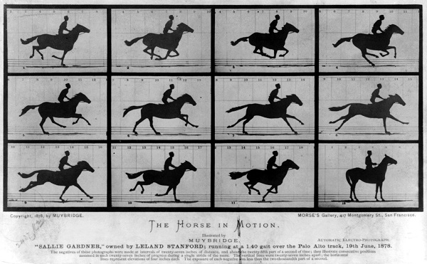 Eadweard Muybridge's The Horse in Motion, 1878. Image courtesy of the Library of Congress Prints & Photographs Division.