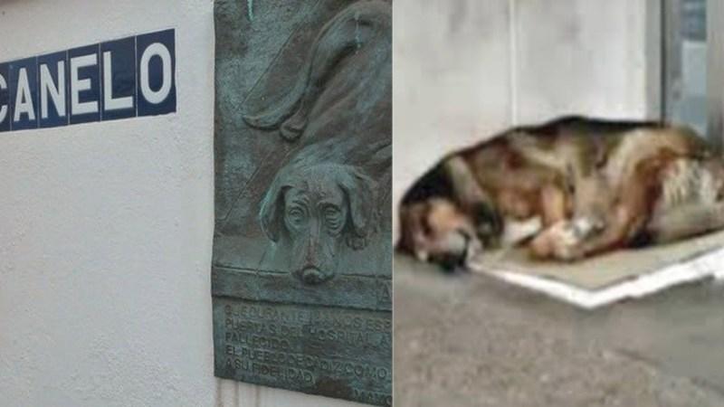 La conmovedora historia del un perro leal: Canelo