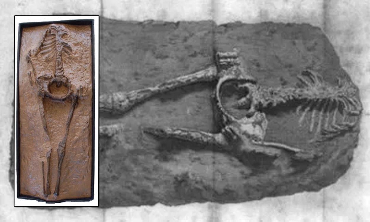 El misterio de los esqueletos de Guadalupe