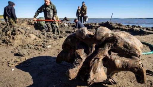 El deshielo saca a la luz un mamut intacto en el Círculo Polar Ártico