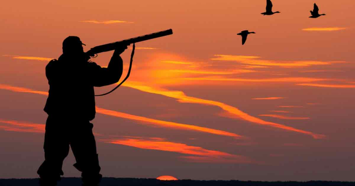 Goose Hunting Tips Positioning