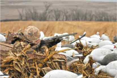 How To Hunt Ducks Leave Your Temper