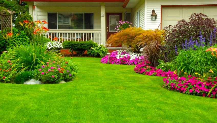 Brighten Up Your Everyday Landscape