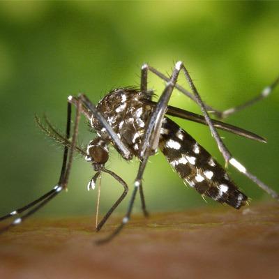 Elite Pest Control - Elite Mosquito Control