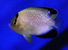 fishwall16