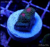 Bubblegum Monster Chalice