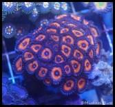 coral_denver_frag_dsc2405