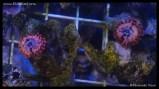 coral_denver_frag_dsc2416
