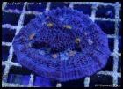 elite_reef_coral_dsc2817