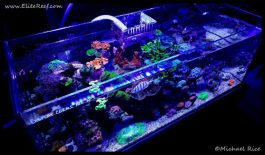reef_aquarium_elite_reef2016-11-18-20-10-52
