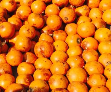 Cherry African Star Apple